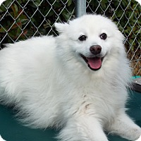 Adopt A Pet :: Charlie - Grants Pass, OR