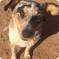 Adopt A Pet :: Marsha meet me 2/17 - Manchester, CT