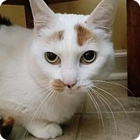 Adopt A Pet :: Lydia - Barrington Hills, IL
