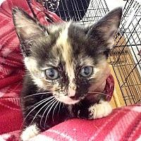 Adopt A Pet :: Citrine - River Edge, NJ