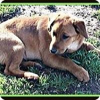 Adopt A Pet :: Bruno - Murrieta, CA