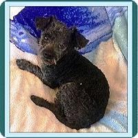 Adopt A Pet :: Reno - Murrieta, CA