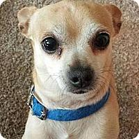 Adopt A Pet :: Memphis Blaze - Seattle, WA