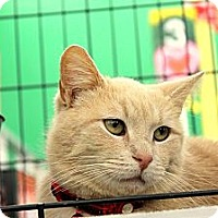 Adopt A Pet :: Baxter - West Lafayette, IN