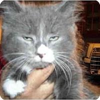 Adopt A Pet :: Andy - Riverside, RI