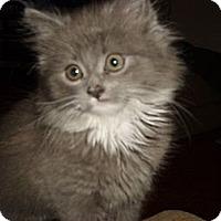 Adopt A Pet :: Rose - Morgan Hill, CA