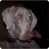 Adopt A Pet :: George - Attica, NY