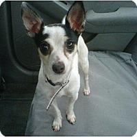 Adopt A Pet :: Nicky & Abbey - Rancho Cordova, CA