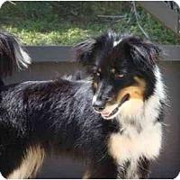 Adopt A Pet :: Trina - Orlando, FL