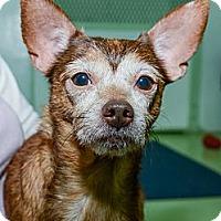 Adopt A Pet :: Leonardo - New York, NY