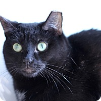 Adopt A Pet :: Mrs. Julie Jangles - Chicago, IL