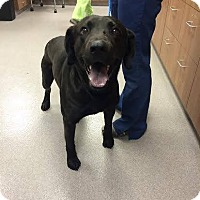 Adopt A Pet :: Smokey - Cumming, GA