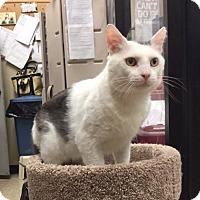 Adopt A Pet :: Gus - Colmar, PA