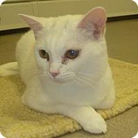 Adopt A Pet :: Kiara - Hamburg, NY
