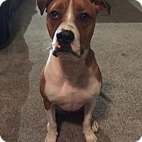 Adopt A Pet :: Wilder - Surrey, BC