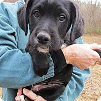 Adopt A Pet :: BIG BETTY - Williston Park, NY