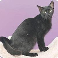 Adopt A Pet :: Jade - Miami, FL