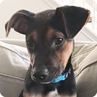 Adopt A Pet :: Bert Sesame Street - Wakefield, RI