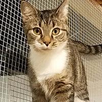 Adopt A Pet :: Billy Jo - Trevose, PA