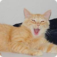 Adopt A Pet :: Denver - Naples, FL