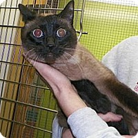 Adopt A Pet :: Sissy - Dover, OH