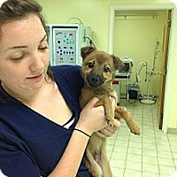 Adopt A Pet :: Finn - Courtesy Post - Glastonbury, CT