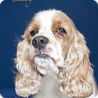 Adopt A Pet :: Sammy - Rancho Mirage, CA