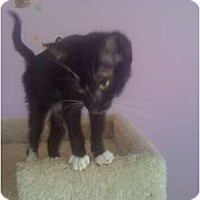 Adopt A Pet :: Sherlock Jr - Mobile, AL