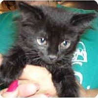 Adopt A Pet :: Chance - Riverside, RI