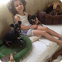 Adopt A Pet :: TJ - Milton, FL