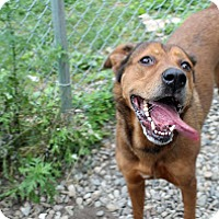 Adopt A Pet :: Niko - Tinton Falls, NJ