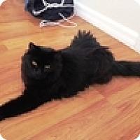 Adopt A Pet :: Murph - Vancouver, BC