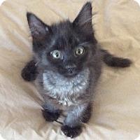 Adopt A Pet :: Chevy - Scottsdale, AZ