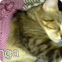 Adopt A Pet :: Kanga - Ogallala, NE