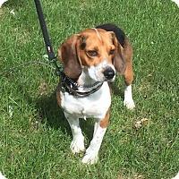 Adopt A Pet :: Eldred aka Jake-Adopted! - Detroit, MI