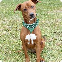 Adopt A Pet :: Rachael - Mocksville, NC