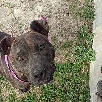 Adopt A Pet :: Serena - Covington, TN