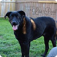 Adopt A Pet :: Shadow - Calgary, AB