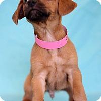Adopt A Pet :: Heart - Waldorf, MD