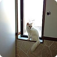 Adopt A Pet :: SAMMIE - Bluff city, TN