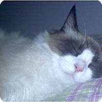 Adopt A Pet :: Sam - Franklin, NC