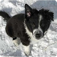 Adopt A Pet :: Whim - Glenrock, WY
