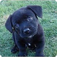 Adopt A Pet :: Bandit - Arlington, TX
