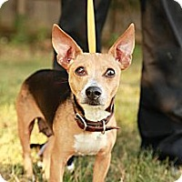 Adopt A Pet :: Beauty - Lancaster, OH