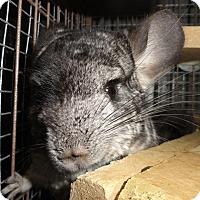 Adopt A Pet :: Laurel - Titusville, FL
