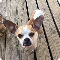 Adopt A Pet :: Jax - Russellville, KY