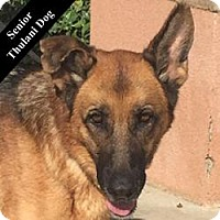 German Shepherd Dog Mix Dog for adoption in Cupertino, California - Willow T.