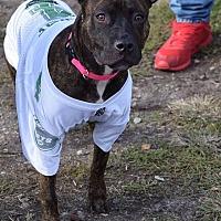 Adopt A Pet :: Andromeda - Ozone Park, NY