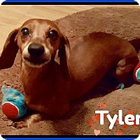 Adopt A Pet :: Tyler - Green Cove Springs, FL