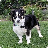 Adopt A Pet :: KODY - Newport Beach, CA
